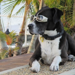 ILS Doggles (Chrome) Modelled by Barney