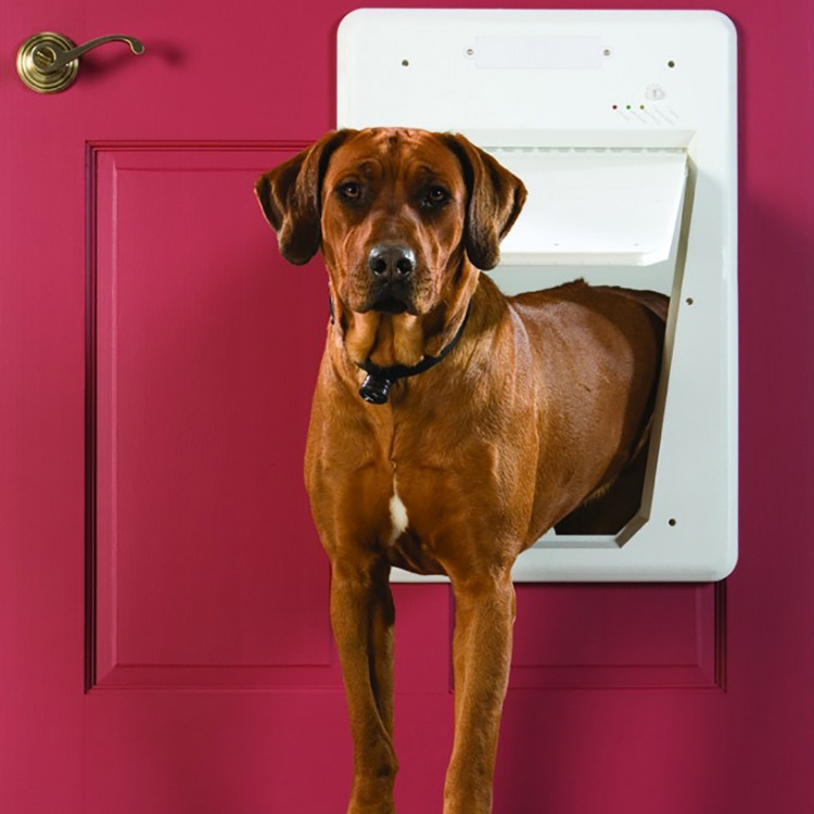 Electronic Smartdoor Petsafe Electronic Dog Doors Petsafe