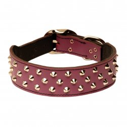 Studded Fashion Leather Staffy Collar