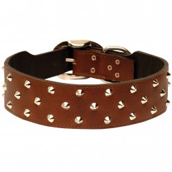 Studded Designer Leather Staffy Collar